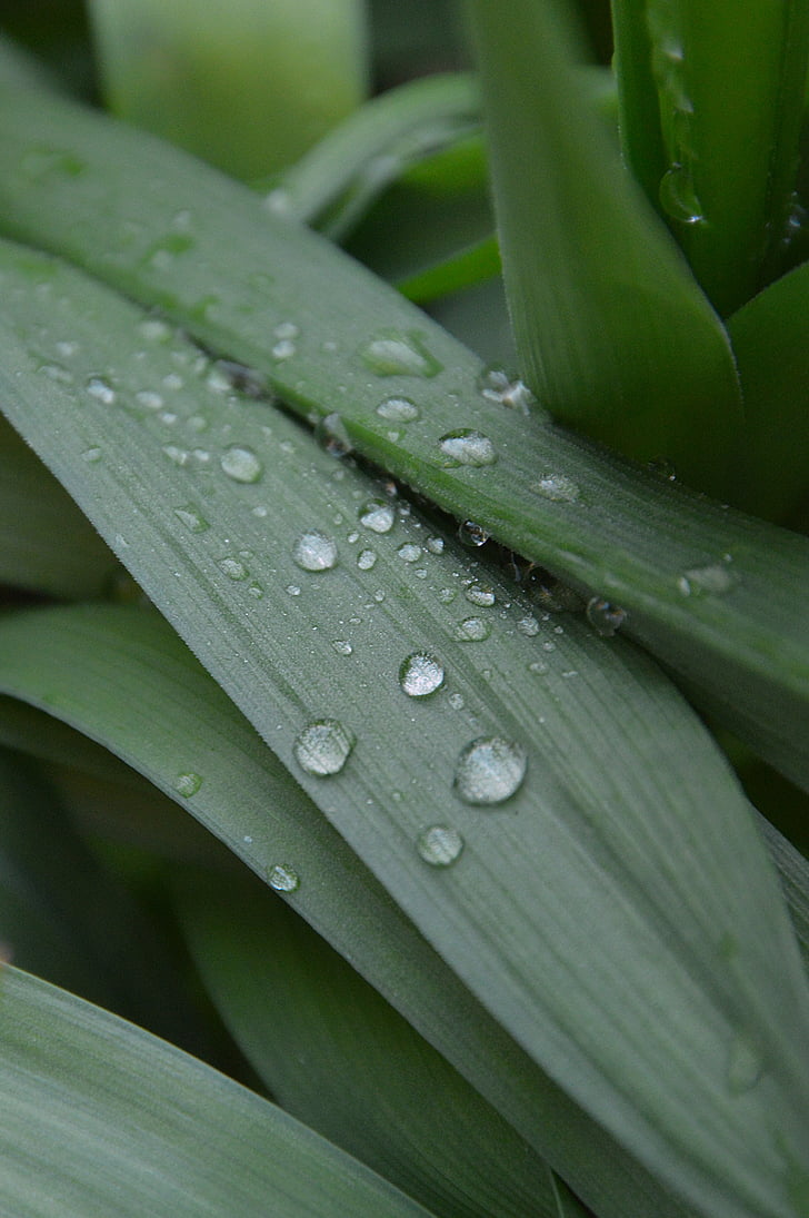 สีเขียว, เพียงเพิ่มน้ำ, ใบไม้, ใบสีเขียว, น้ำค้างหล่น, ฤดูใบไม้ผลิ, สวน