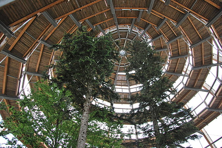 Krošnja pot, Krošnja, drevo, Bavarski gozd, drevo sled, spiralno, Riva