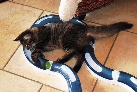 little kitten, play, cat toy