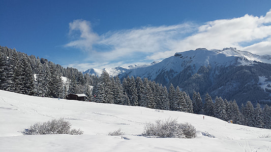 winter, snow, wintry, white, cold, light, nature