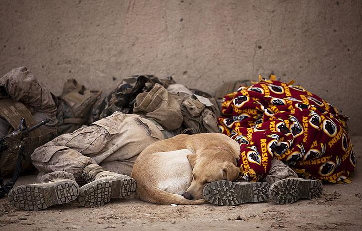 militar, soldats, dormint, resta, gos, canina, uniforme