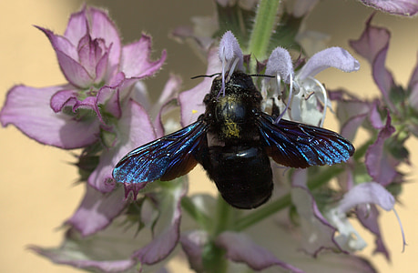 bee, flight, pollination, insecta, flower, nature