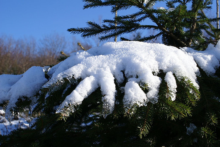 snow, fir, winter, spruce, tree, snowy, nature