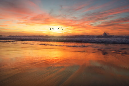 ramat, ocells, volant, que s'estavella, Mar, ones, riba
