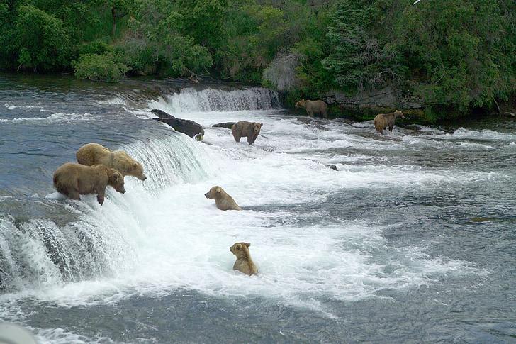 bruns, pesca, l'aigua, peu, vida silvestre, natura, predadors