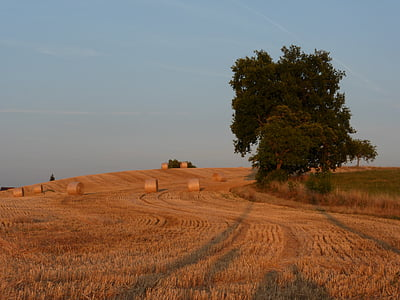 field, france, summer, fields, landscape, trees