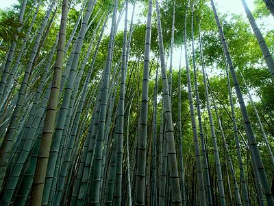 bambusové lesy, bambus, Zelená, Bambus - rastlina, Príroda, Bamboo grove, Forest