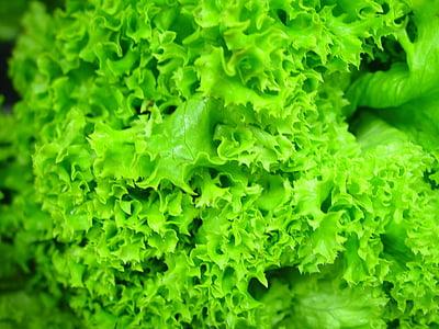 lettuce, fresh, hydroponic, green, healthy, food, salad