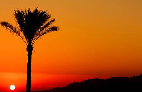 egypt, to rise, sun, aurora, dawn, color