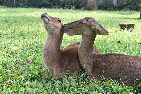 động vật, hươu, công viên, động vật có vú, Thiên nhiên, sở thú, Dễ thương
