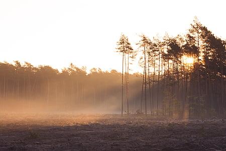 bosc, natura, matí al bosc, bosc del matí, matí de bosc, Alba, Alba al bosc