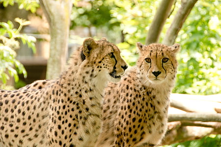 africa, kenya, safari, nature, holiday, national park, animals