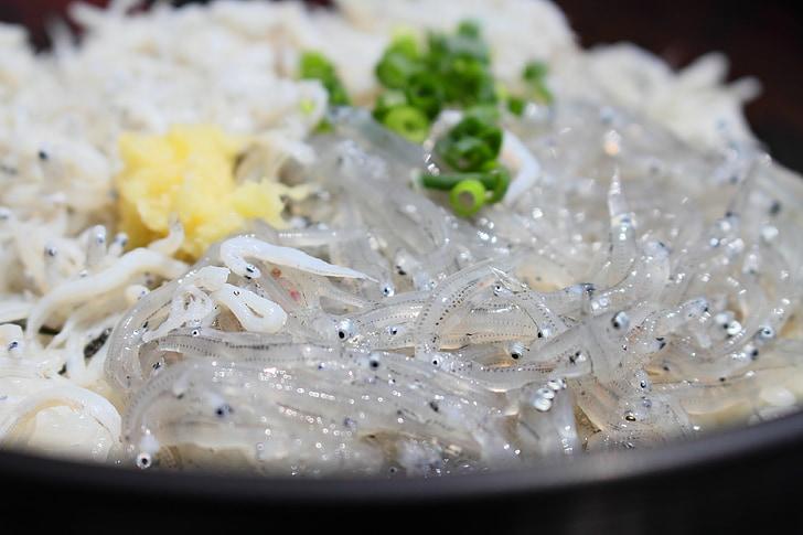 Shirasu, Seitons, tagonoura, Shizuoka, bol d'arròs cobert amb el sashimi, gurmet, bol d'arròs