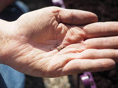 seemned, lilleseemned, vt, külvi, Watford, käsi, aednik