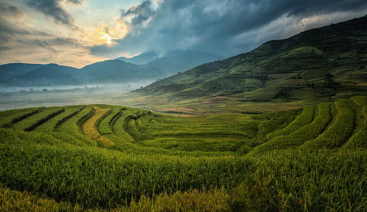 agriculture, asia, cat, china, cloud, colorful, the country