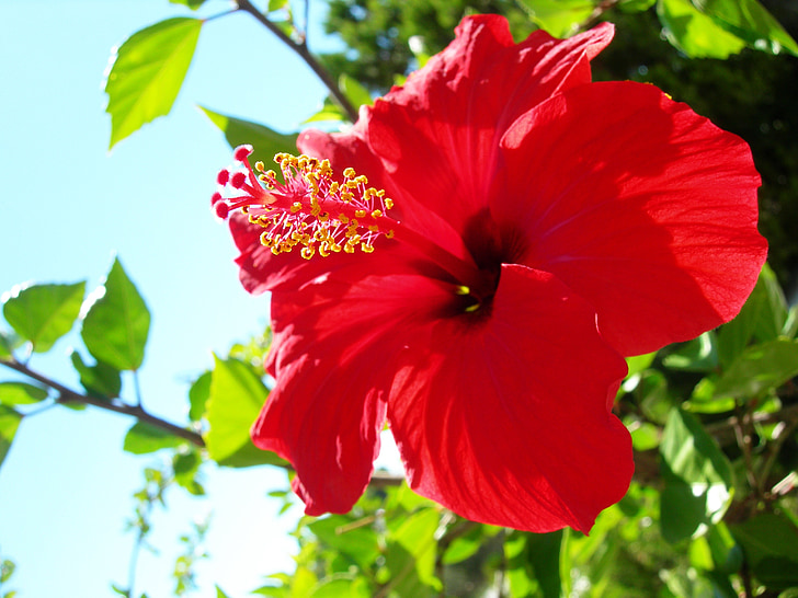 red flower, beautiful, beautiful flower, flower, red, flowers, lovely