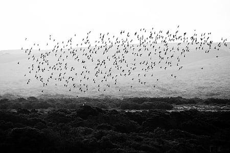 ocell, ocells, ramat d'ocells, animal, animals, vida silvestre, natura