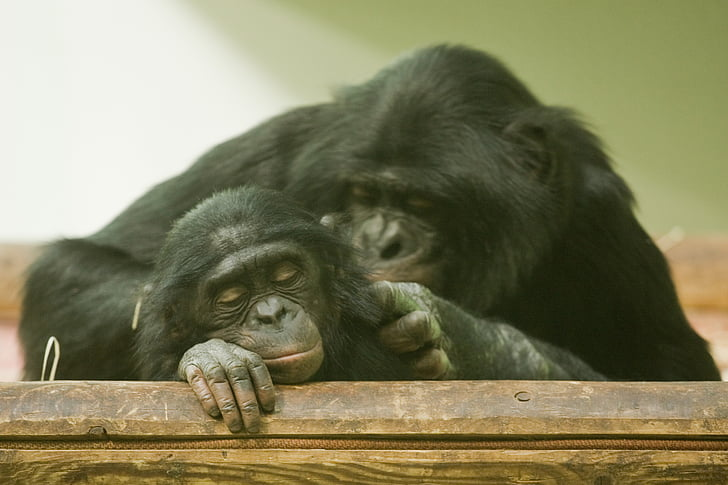 mico, mare, mare i el nen, zoològic, nen de mico, animal, mamífer