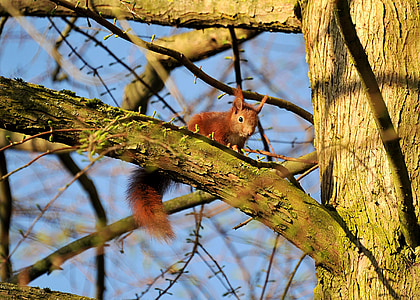squirrel, animal, young animal, young, nature, tree