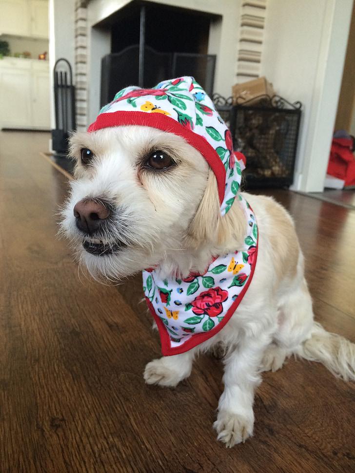 dog, funny dog, dog in clothes, surprised dog, pets, sitting dog