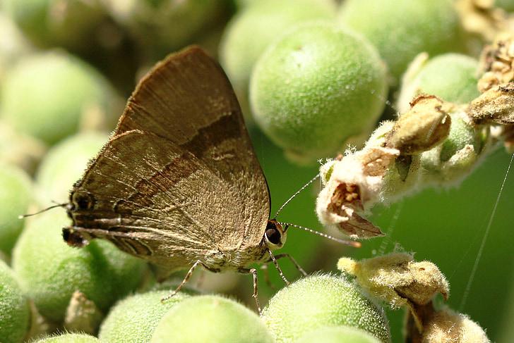 kodes, atstāj, spārni, zaļa, dzīvnieki, ekoloģija, kukaiņi