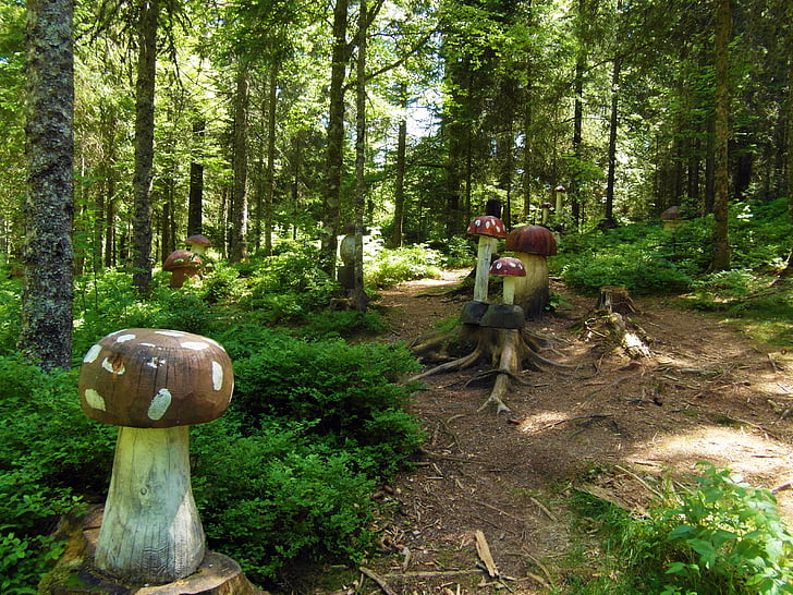 sopp skog, sopp, tre, eventyr skog, fly agaric, Schwarzwald
