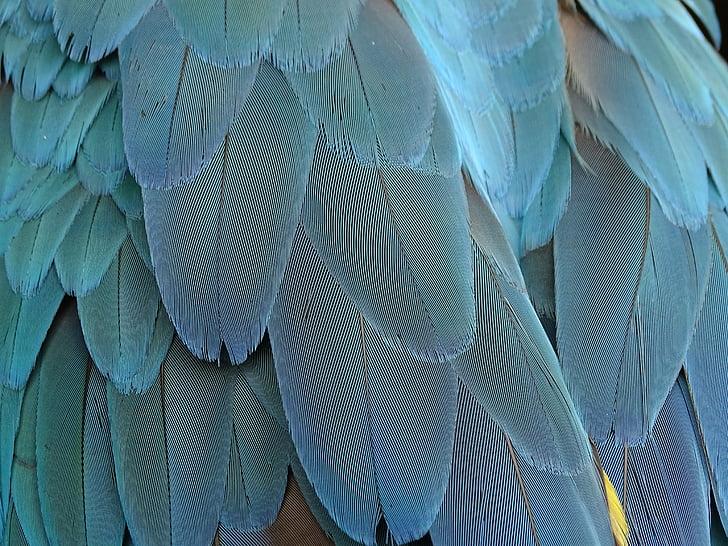 перо, перушина, синьо, папагал, птичи пера, птица, пролетта рокля