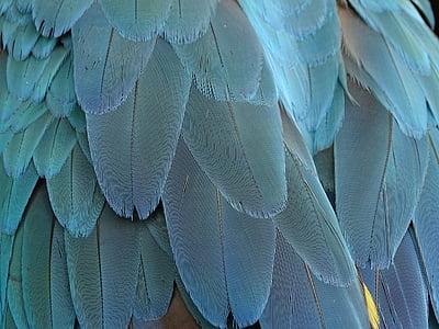 pero, perje, plava, papiga, perje ptica, ptica, proljeće prerušiti