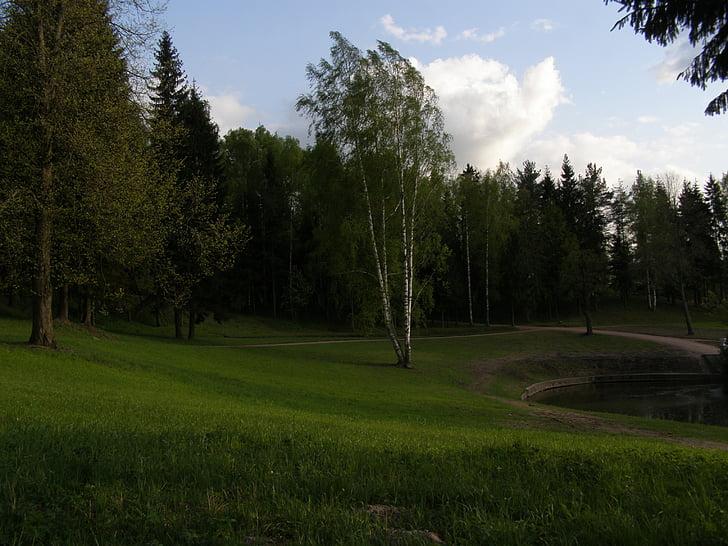 soirée, printemps, Parc, arbres, Sky, la rivière green Tree