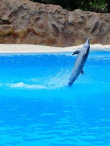 Dofí mular, Dofí, salt, Tursiops truncatus, animals, meeresbewohner, Delphinidae