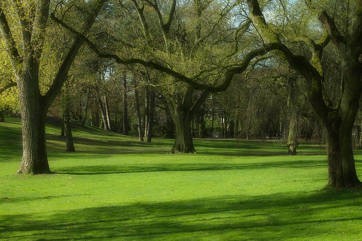 Park, dreves, pomlad, drevo