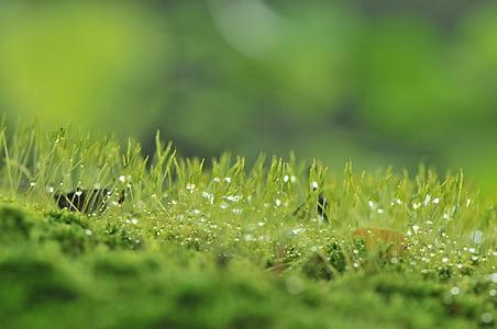 Moody, natura, cer, copac, distractiv, peisaj, sumbru