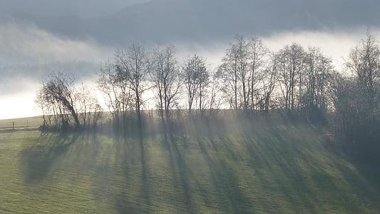 Allgäu, Lago forggensee, autunno, nebbia, alberi, ombra