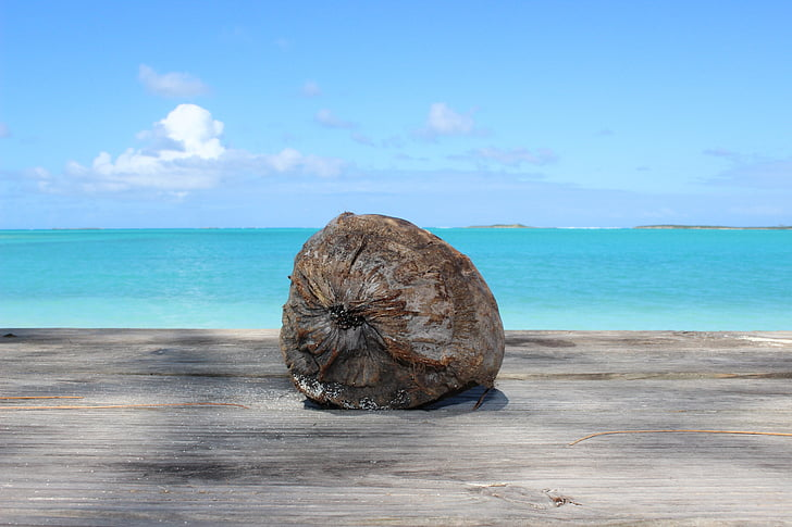 coconut, beach, caribbean, sea