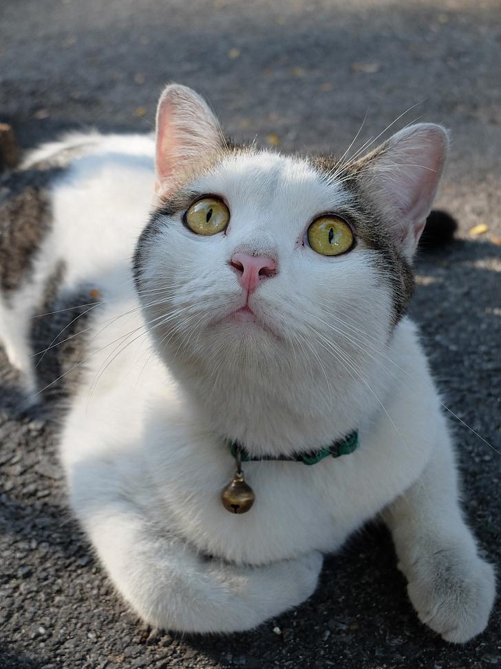 thailand, bangkok, cat, animal, pet