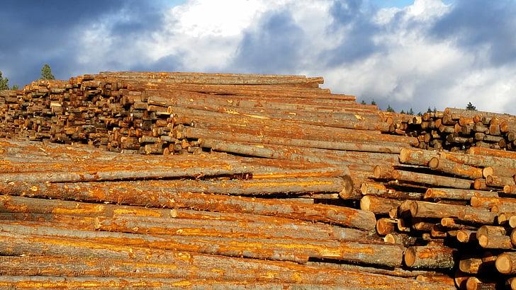 legname, cielo, legno, mucchio, legname, crudo, materiale