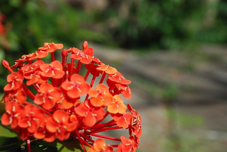 flowers, flower, wild flower, nature, wild, wild plants, red flowers