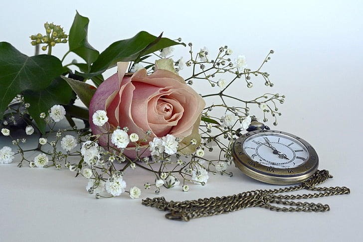 Rosa, flor, flor, flor, flor rosa, Gypsophila, romàntic