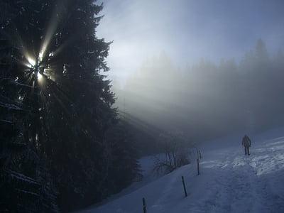 winter, fog, firs, sunbeam, light, snow, wanderer