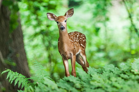 дива природа, младите, бозайник, животните, диви, сафари, гора