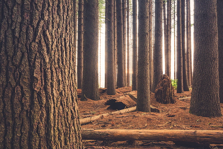trees, plant, nature, outdoor, travel, forest, woods