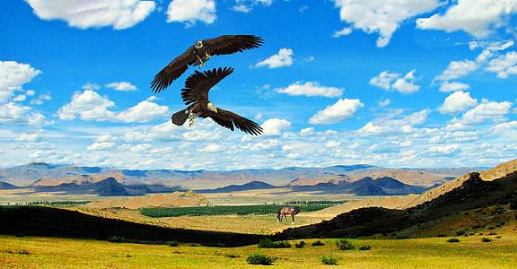орли, птица, птици, коне, Преъри, степта, планини